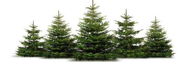 Weihnachtsbaumverkauf - © by-studio - Fotolia.com