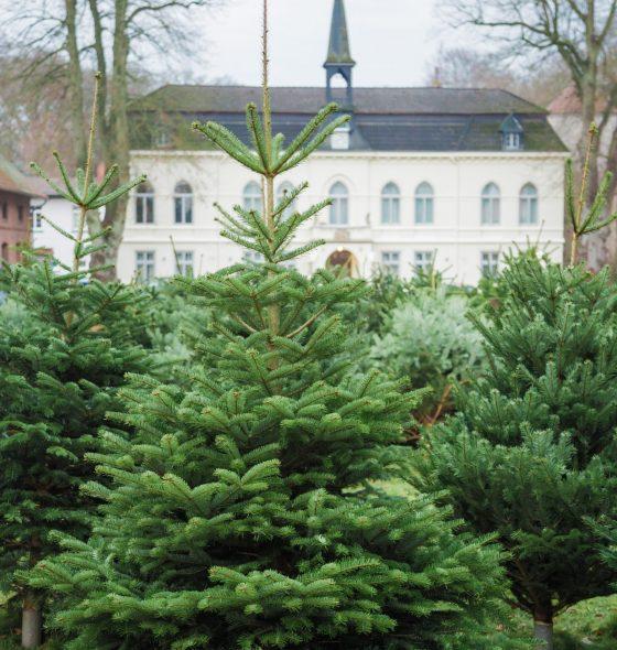Gut_Loy_Weihnachtsbaumverkauf_01